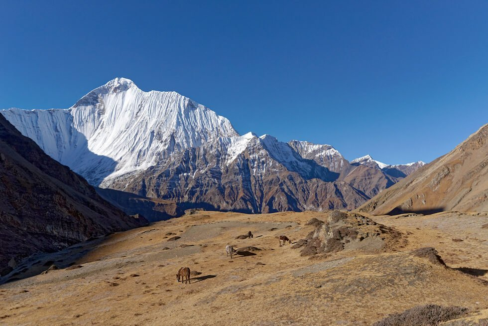 upper dolpo trek, View of Dhaulagiri II